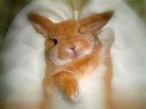 Daily_bunny_bunnyangel