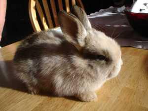 Daily_bunny_breakfastbunny