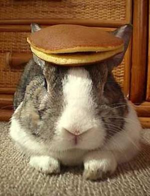 Daily_bunny_flapjackbunny