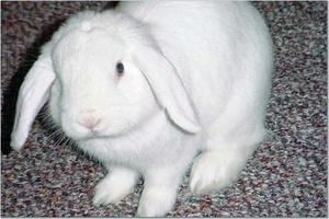 Daily_bunny_honeybunny