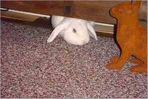 Daily_bunny_peekingbunny_2