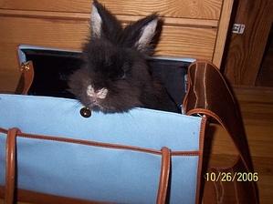 Daily_bunny_handbag_3
