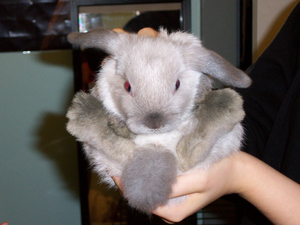 Daily_bunny_moogle