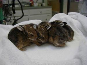 Daily_bunny_babybunnypile