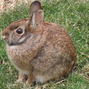 Daily_bunny_bunball