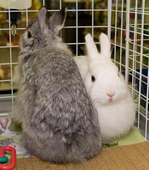 Daily_bunny_bunbutt