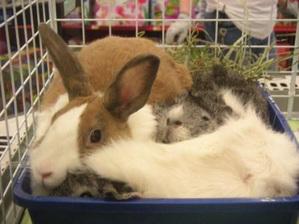 Daily_bunny_spicetrio1_2