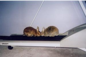Daily_bunny_treadmill