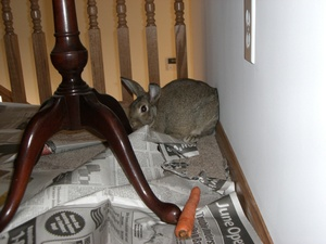 Dailybunny_news2