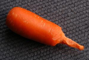 Dailybunny_carrotscrewdriver
