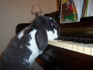 Dailybunny_piano