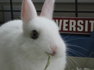 Dailybunny_supercloseup