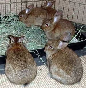 Dailybunny_townmeeting