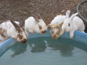 Dailybunny_wateringhole