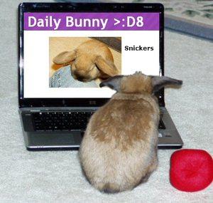 Dailybunny_dailybunny