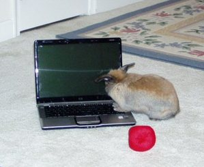 Dailybunny_laptop1