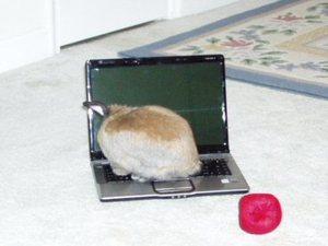 Dailybunny_laptop2