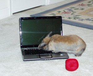 Dailybunny_laptop3