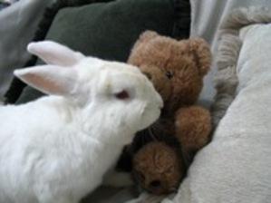 Dailybunny_teddybear