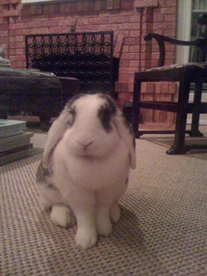 Dailybunny_posed