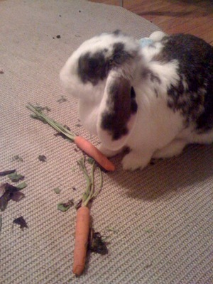 Dailybunny_whatmess