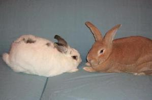 Dailybunny_plotters