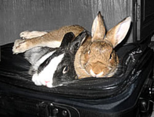 Dailybunny_packing