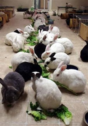 Dailybunny_buffet