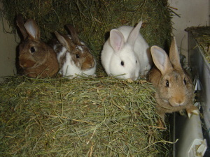 Dailybunny_group