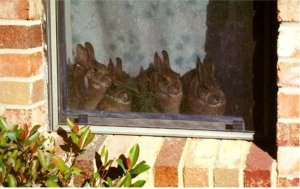 Dailybunny_window