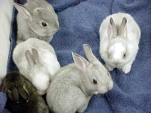 Daily_bunny_bunnycollection
