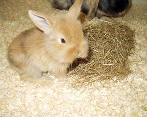 Daily_bunny_bunnynest
