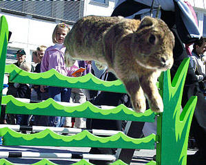 Daily_bunny_bunnyolympics