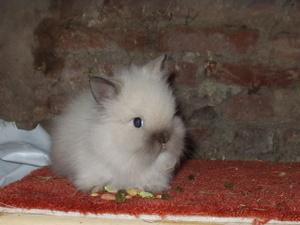 Daily_bunny_bunnyorkitty