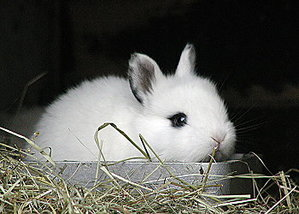 Daily_bunny_cuteness
