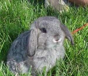 Daily_bunny_cutestbunny
