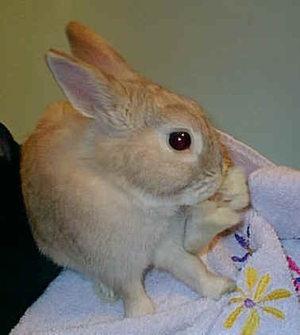 Daily_bunny_dryingbunny