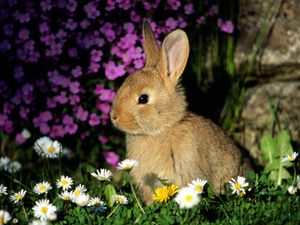 Daily_bunny_flowers