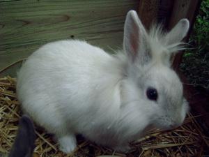 Daily_bunny_fluffybunny2