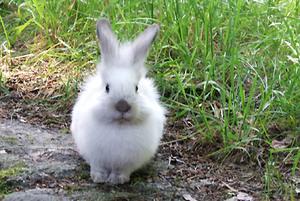 Daily_bunny_fluffybunny_1