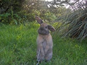 Daily_bunny_hmmmmm