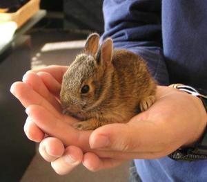 Daily_bunny_miniaturebunny