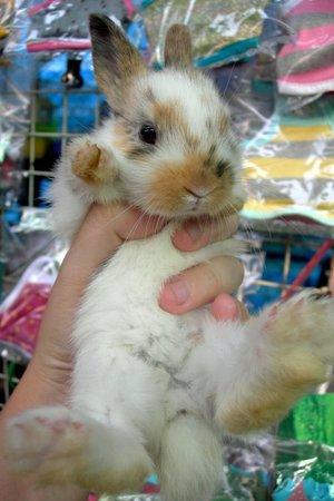 Daily_bunny_newyearsbunny
