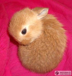Daily_bunny_russianrabbitzen