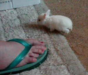 Daily_bunny_snowbunny