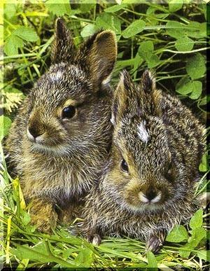 Daily_bunny_stereobunnies