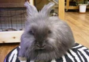 Daily_bunny_tacky