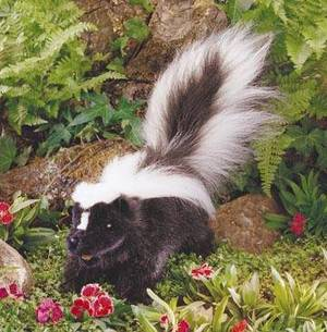 Stuffed_skunk